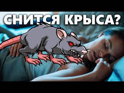 Сонник ловить белую крысу. к чему снится ловить белую крысу видеть во сне - сонник дома солнца