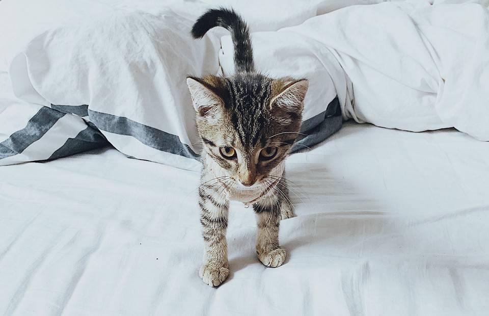 Сонник маленькие серые котята. к чему снится маленькие серые котята видеть во сне - сонник дома солнца