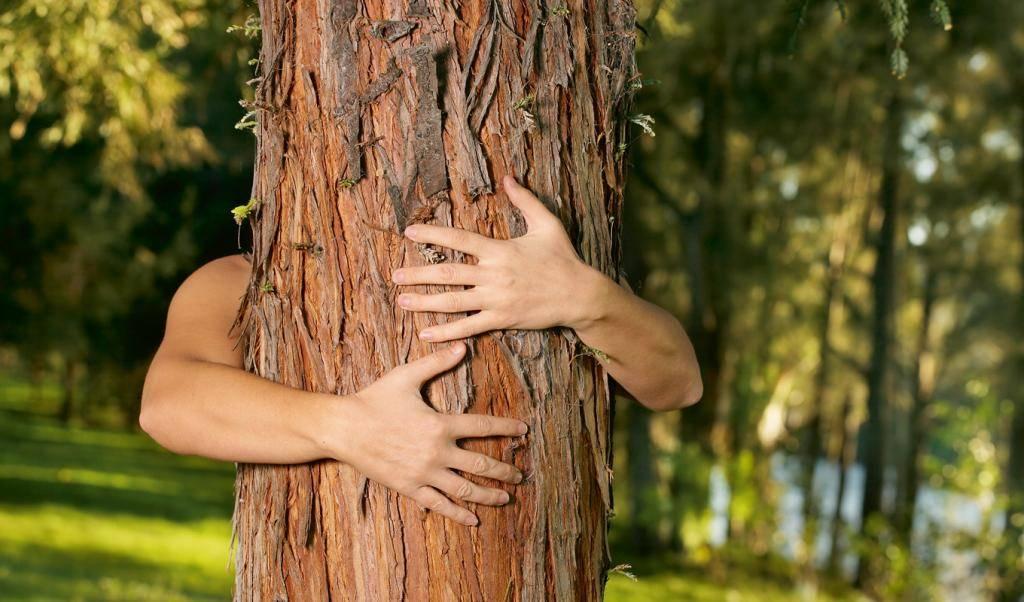 Деревья целители, дающие положительную энергию человеку и забирающие негативную, отрицательную. как заряжаться энергией от деревьев?