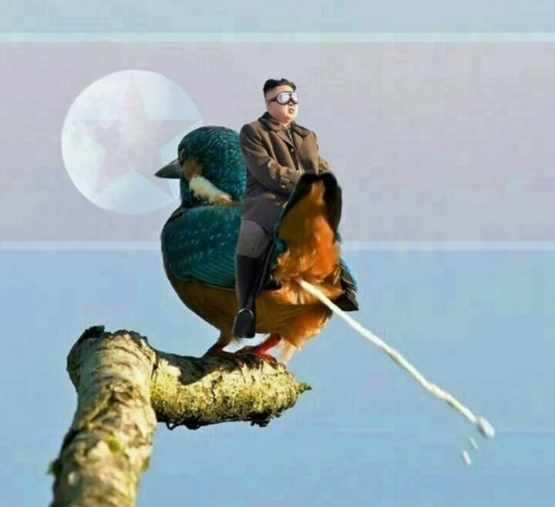 Узнайте, что означает примета, если птица накакала вам на голову, толкование в разные дни недели