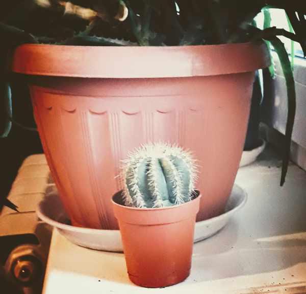 Кактусы в доме: хорошо или плохо, приметы и суеверия. домашние кактусы: вред и польза
