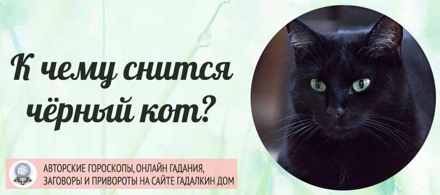 Сонник черный кот. к чему снится черный кот видеть во сне - сонник дома солнца