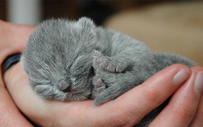 К чему снится серая кошка ???? - 37 подробных значений ???? по сонникам: что означает, если женщине или мужчине приснилась большая и пушистая серенькая кошечка с котятами