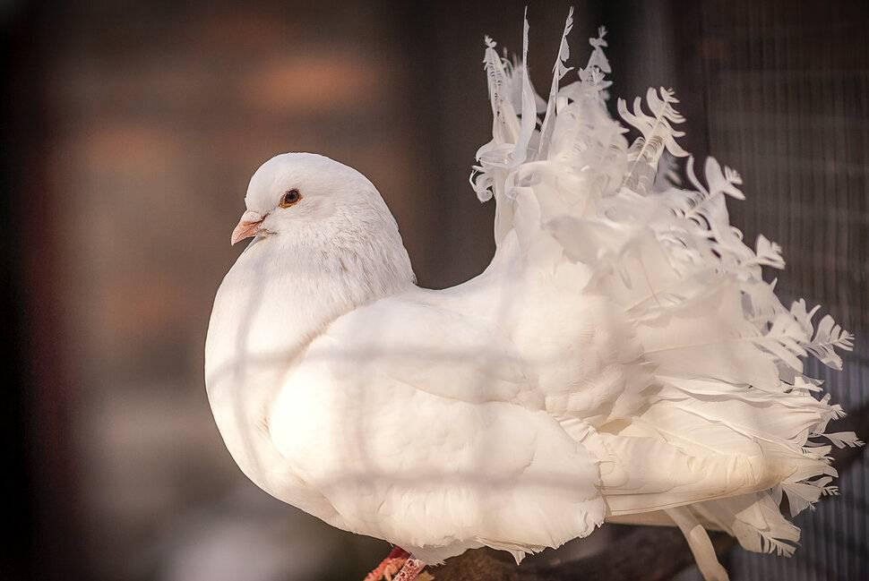 Белые голуби в небе