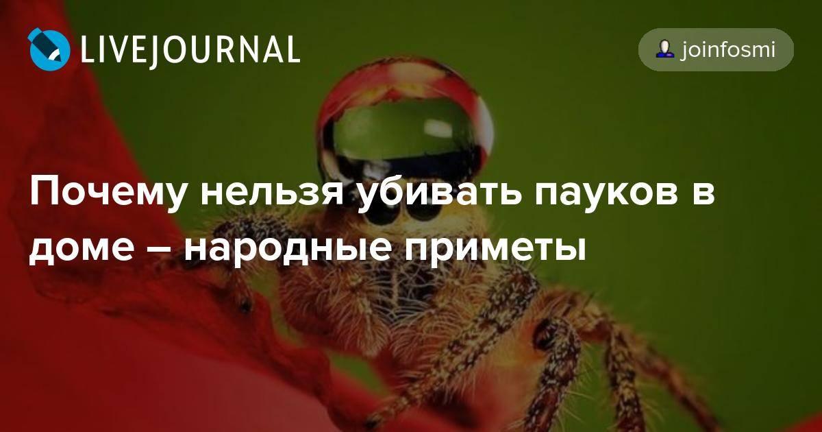 Почему нельзя убивать пауков: научное объяснение