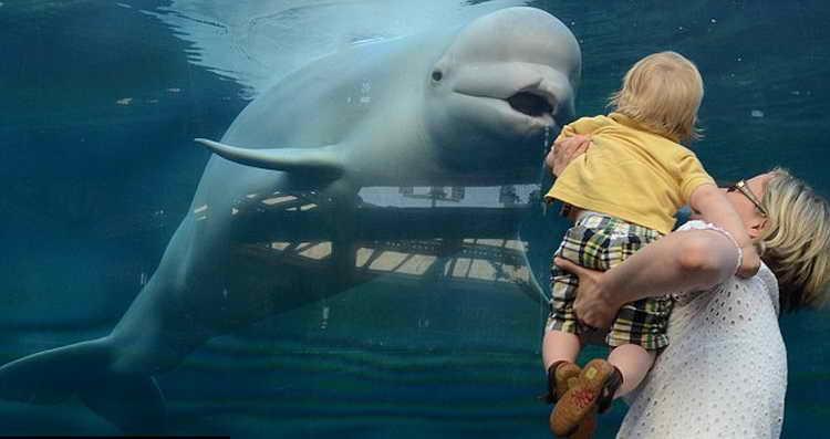 К чему снится кит: варианты толкования по сонникам, если кит снится в воде