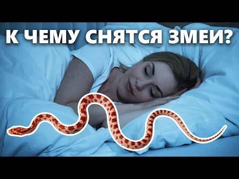 К чему снится удав женщине и мужчине: толкование по сонникам видеть во сне большого, черного или зеленого змея