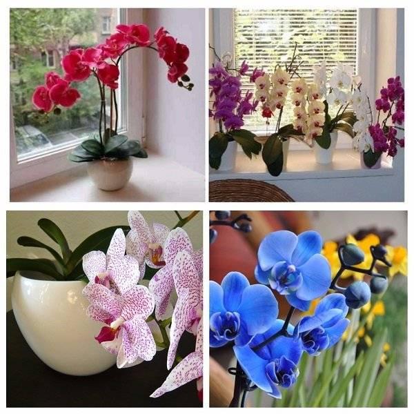 Орхидея дома: плохие и хорошие народные приметы и суеверия, можно ли держать цветок в квартире по фен-шуй и где его лучше поставить