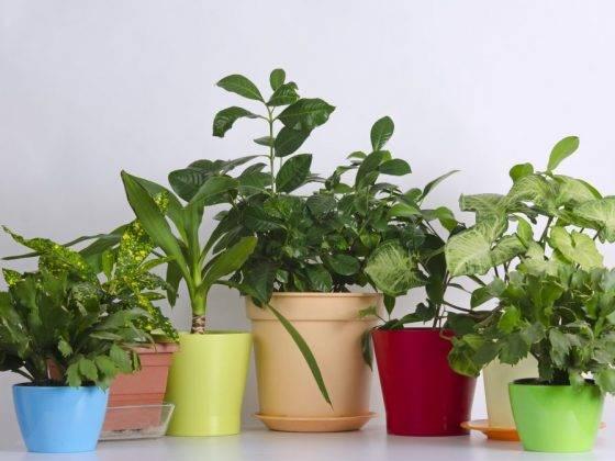 Какие цветы должны быть дома обязательно, фото и название самых полезных растений