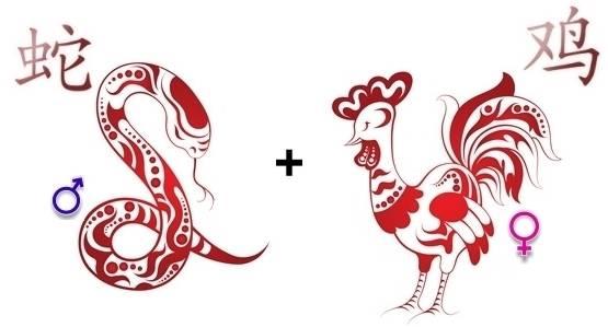 Змея и Змея: совместимость в зодиакальном союзе