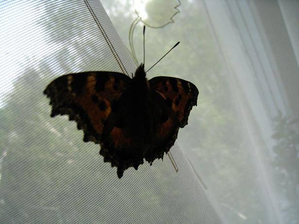 Народные приметы о бабочках