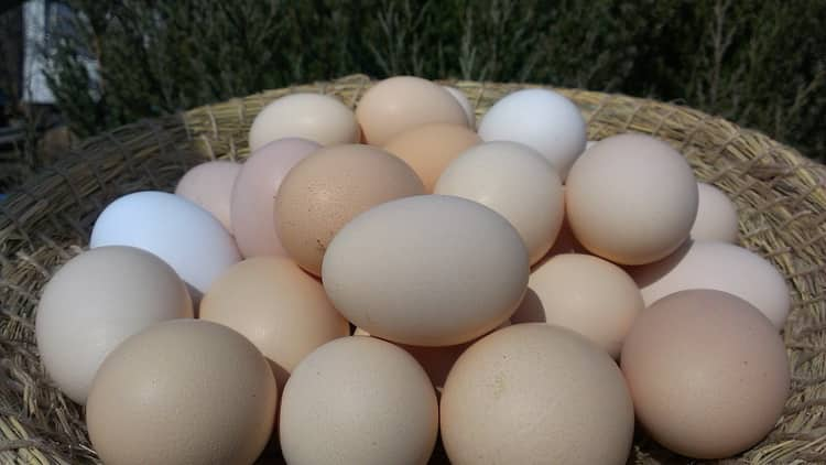 К чему снятся яйца куриные во сне: женщине, мужчине, много яиц, сырые