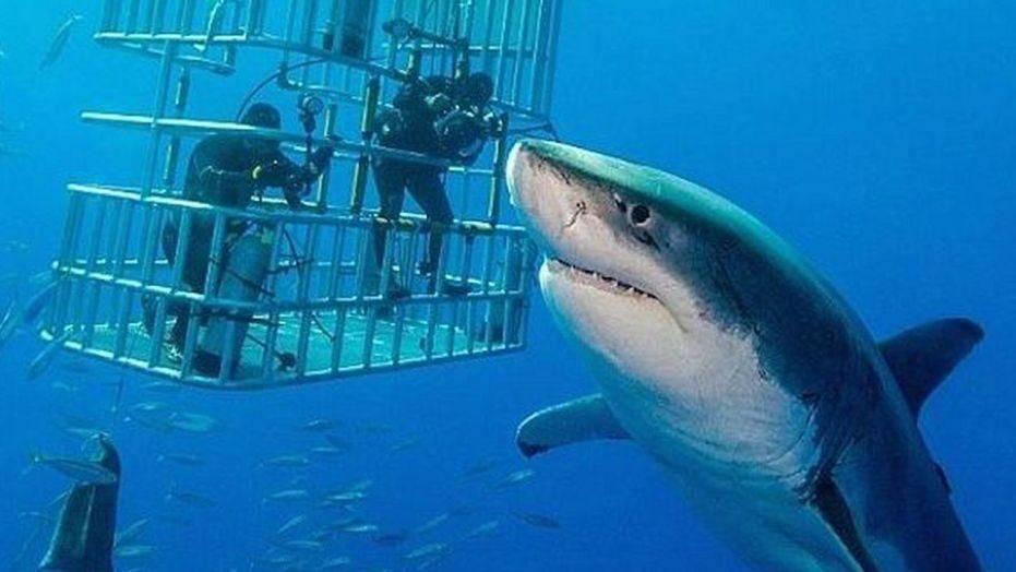 К чему снится живая акула по соннику? видеть во сне живую акулу – толкование снов.