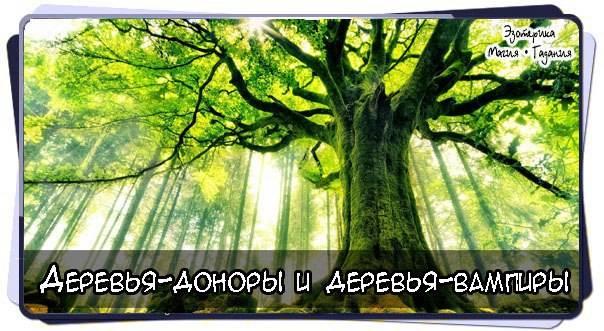 Как восстановить и очистить энергетику при помощи деревьев (с видео) как восстановить и очистить энергетику при помощи деревьев (с видео)