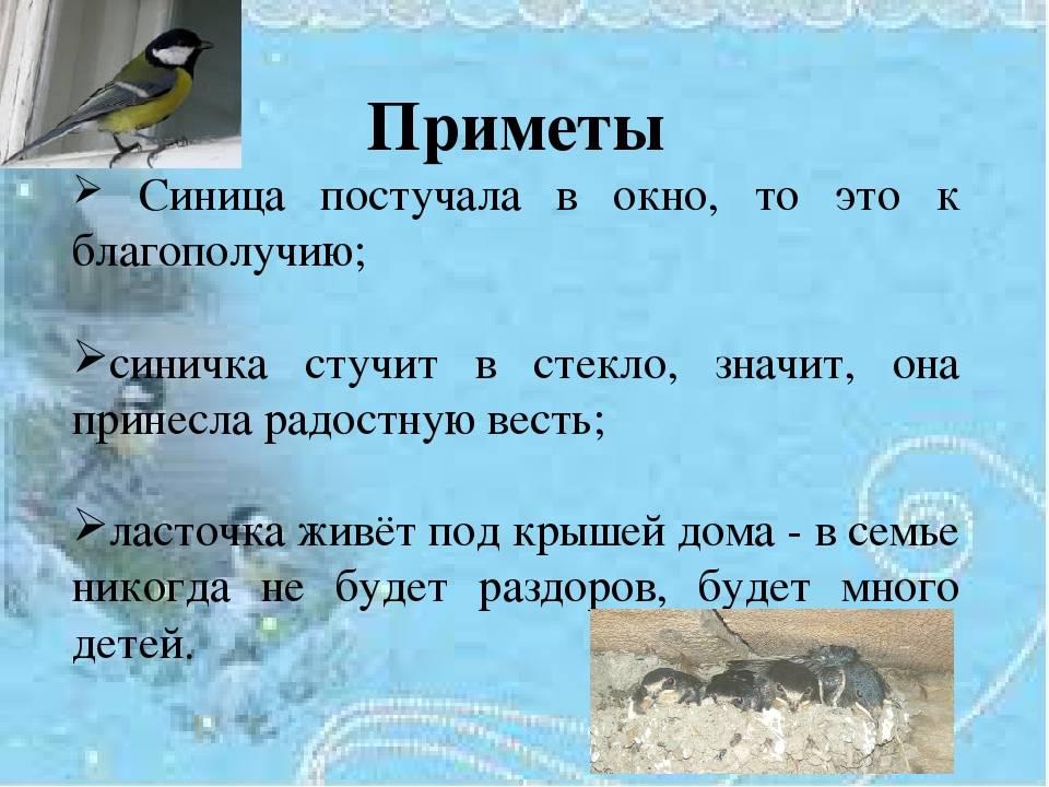 Если птица залетела в окно в дом или в квартиру, к чему это по народным приметам.
