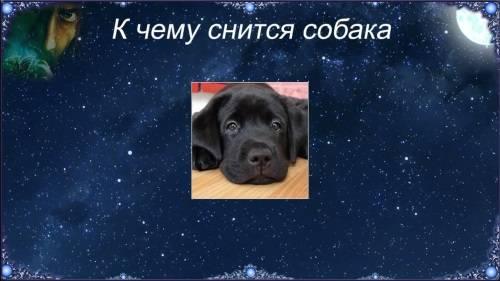 Сонник мертвая белая собака. к чему снится мертвая белая собака видеть во сне - сонник дома солнца