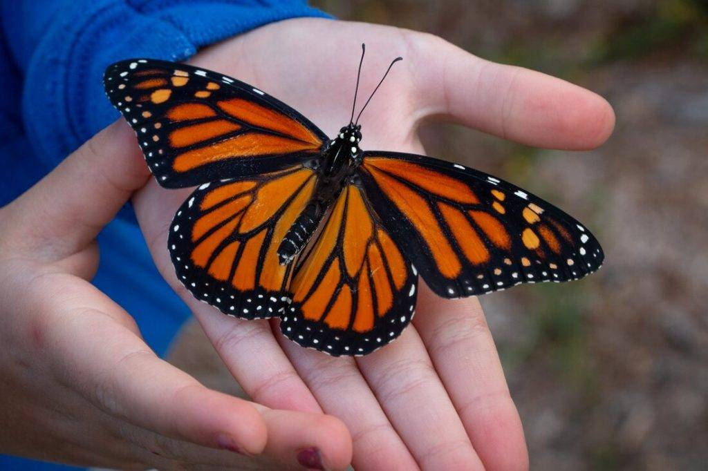 Мотылек бьется в окно примета. приметы про бабочек