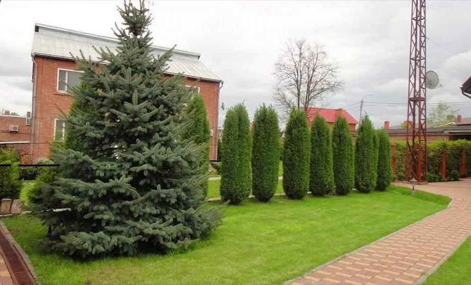 Почему нельзя сажать елки и другие хвойные на участке: народная примета и мнение экспертов