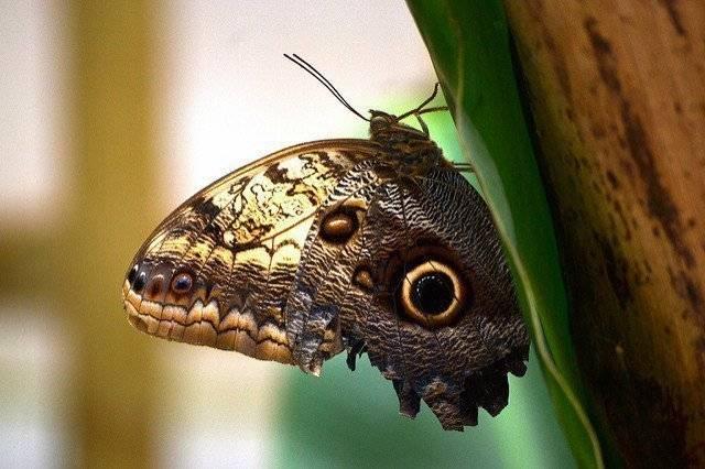 Примета: бабочка залетела в квартиру, дом, осенью, зимой, к чему села на человека, бьется в окно
