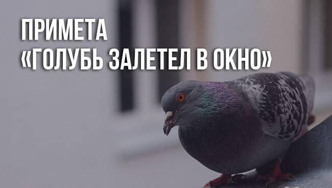 Народная примета, если птица залетела в дом