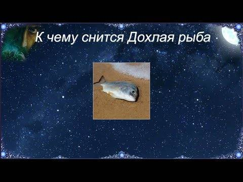 К чему снится рыба в воде?