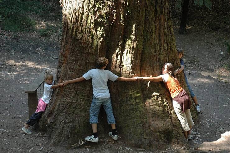 Деревья-доноры и деревья-вампиры: как восстановить энергетический баланс
