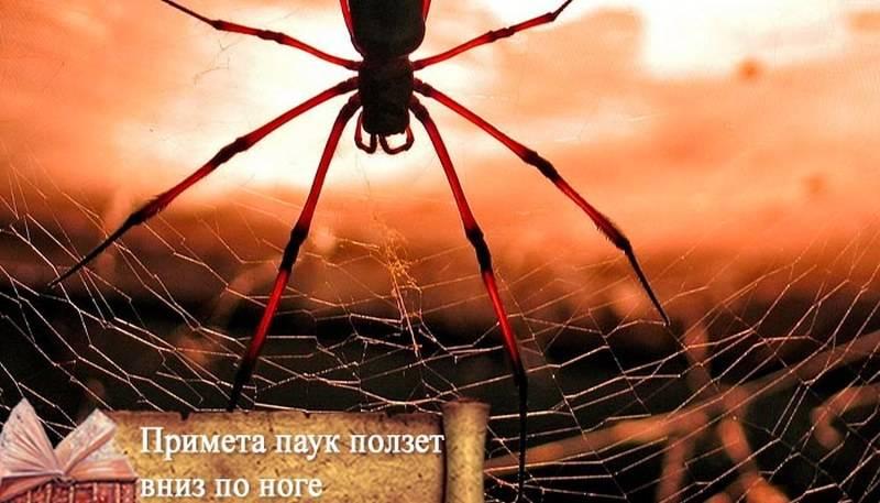 Интересные приметы про пауков