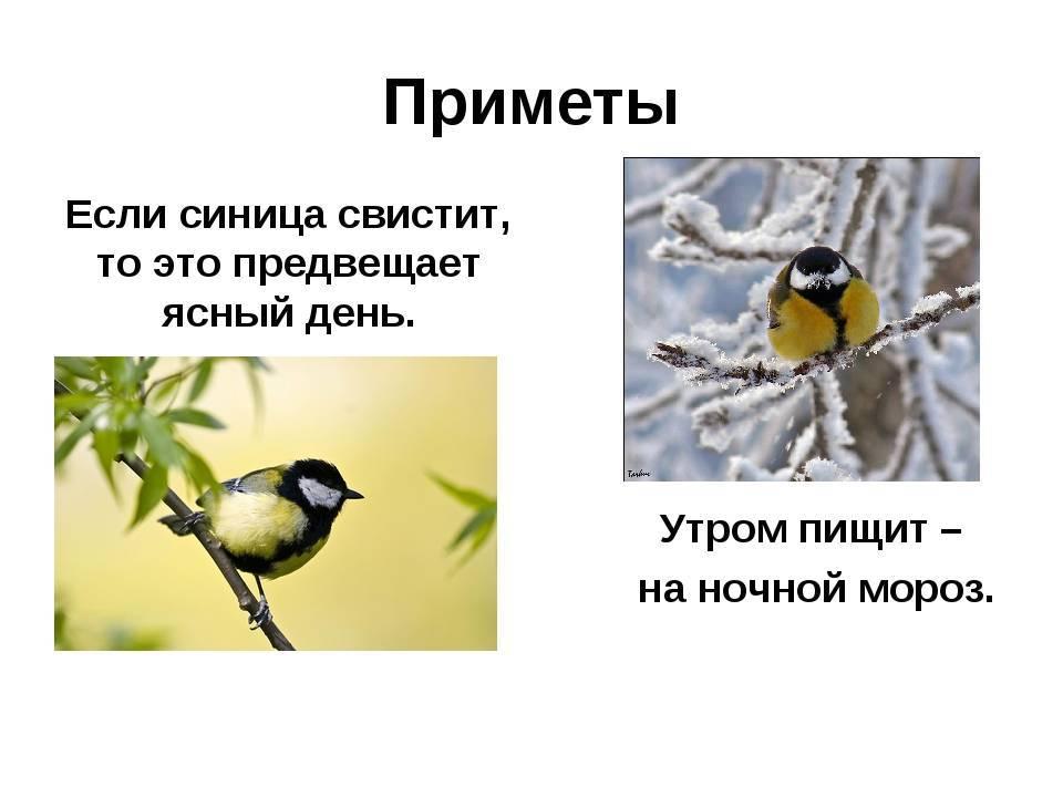 Приметы про птиц — хорошие и плохие