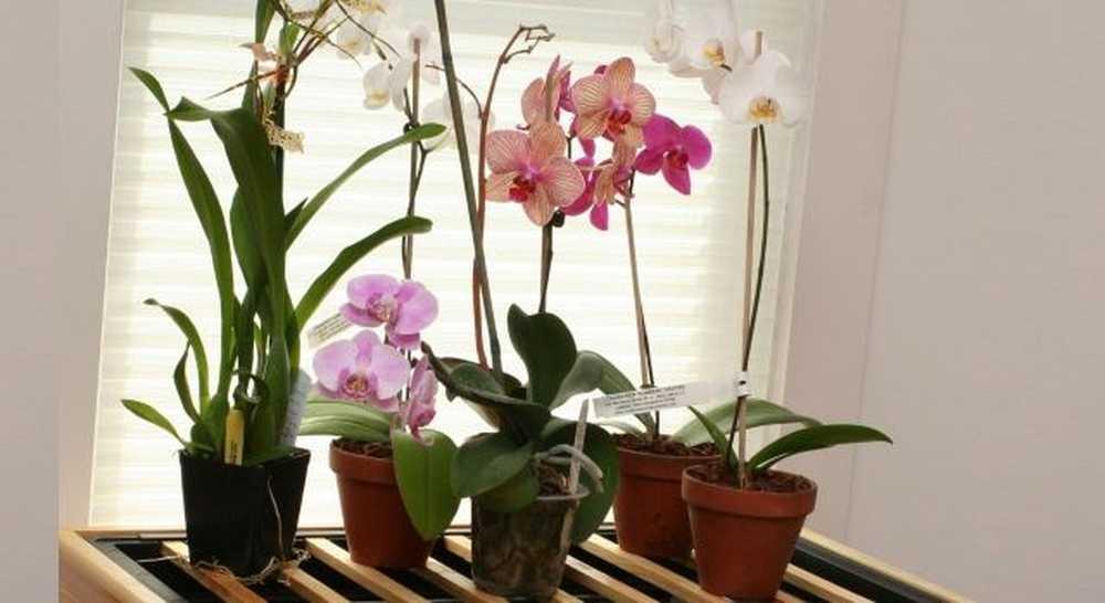 Орхидея в доме: значение и толкование приметы