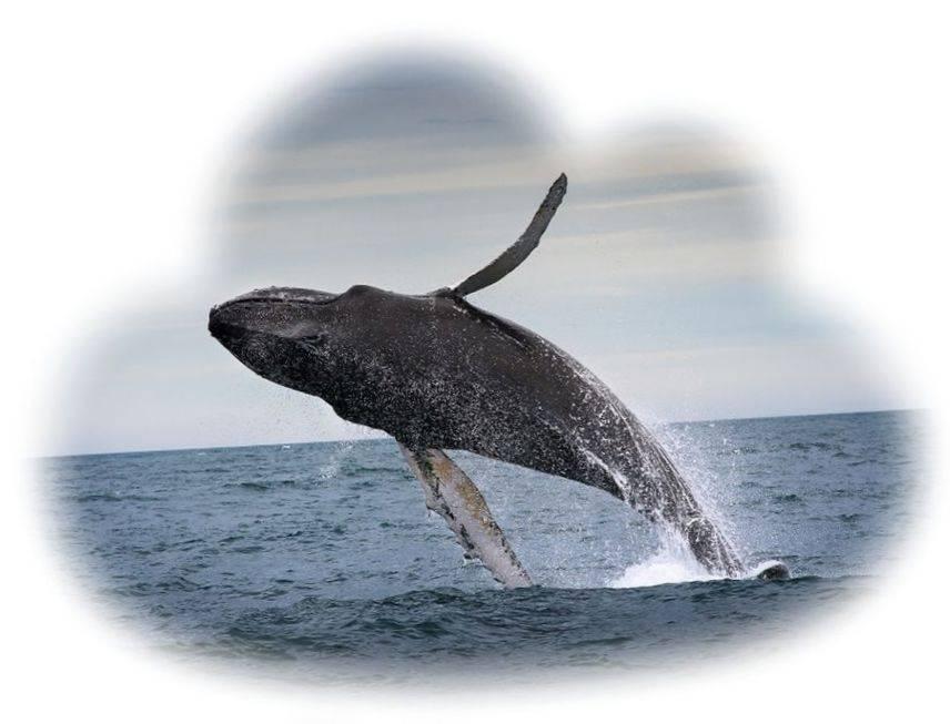 К чему снится кит женщине, девушке - сонник. видеть кита в море или у берега