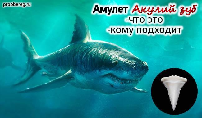 Амулет акулий зуб