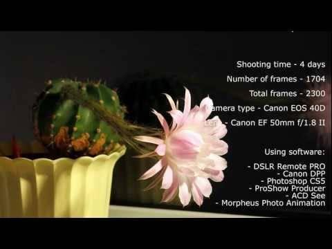 Приметы связанные с цветением кактуса