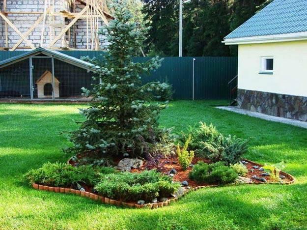 Почему хвойные деревья ни в коем случае нельзя сажать возле дома :: инфониак