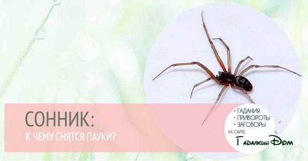 К чему снится огромный паук, толкование сна по соннику