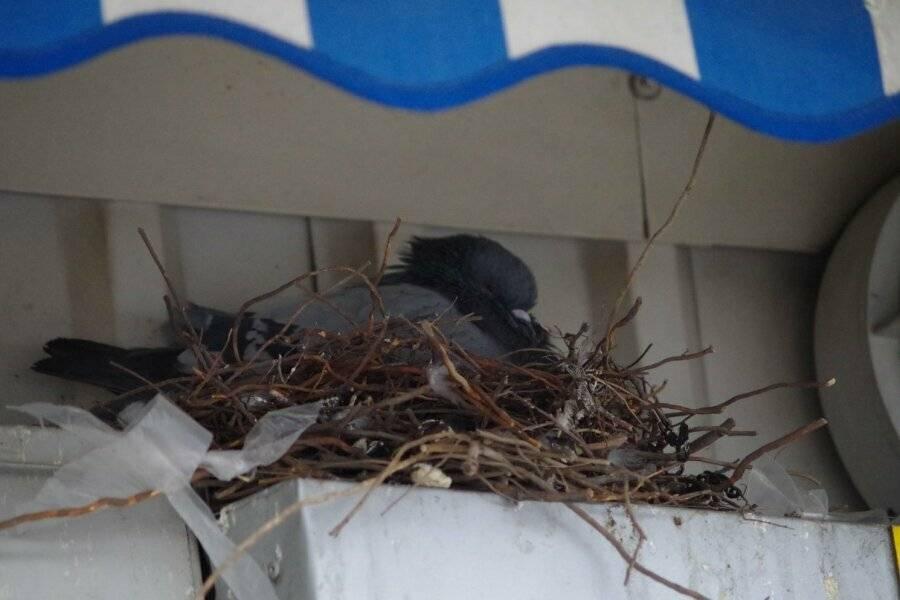 Ласточка залетела в дом или свила гнездо. какая примета, что может случиться?