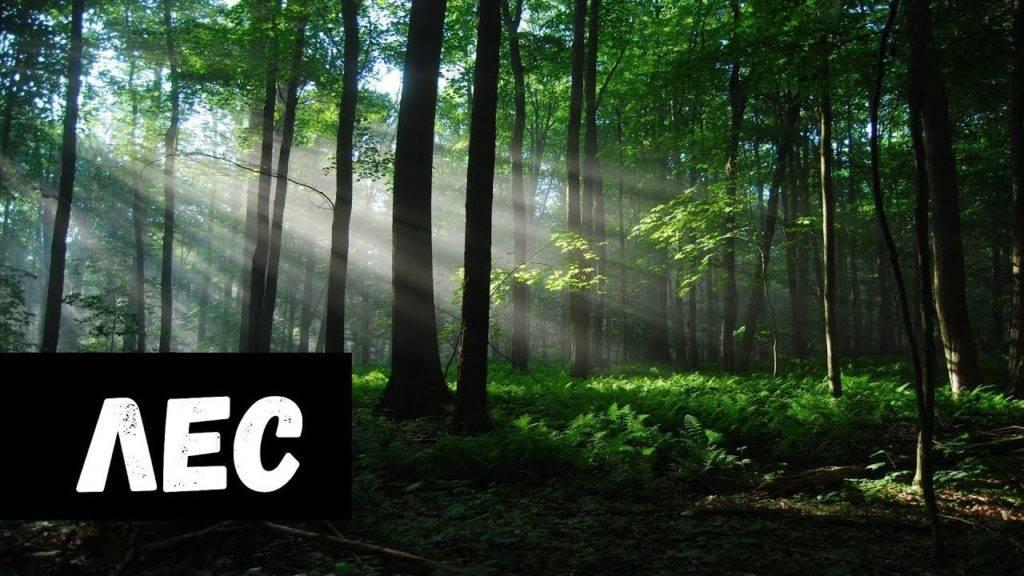 К чему снится лес, толкование сна по соннику
