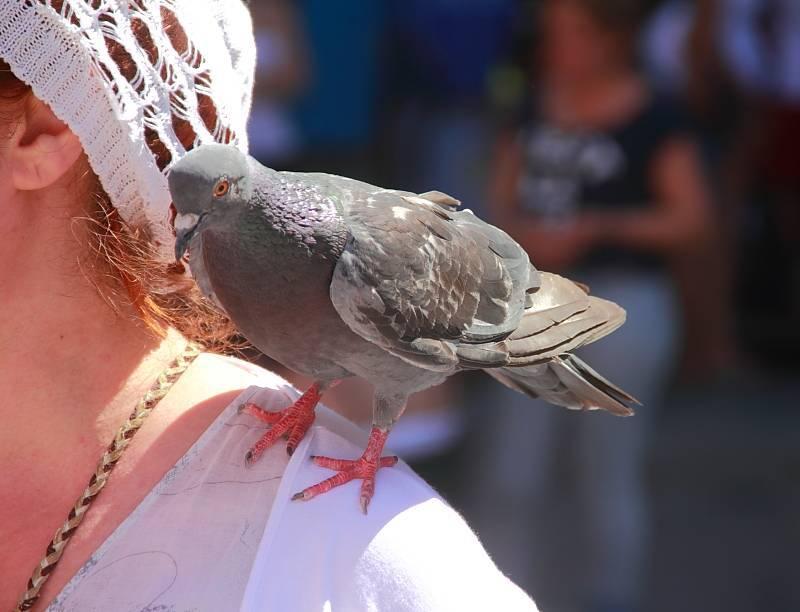 К чему ворона села человеку на голову