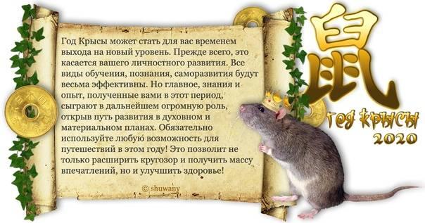 Скорпион в год крысы: характеристика для мужчины и женщины