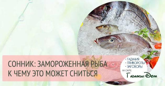 Ловить рыбу во сне для женщины: значение сновидения, что предвещает, чего ожидать