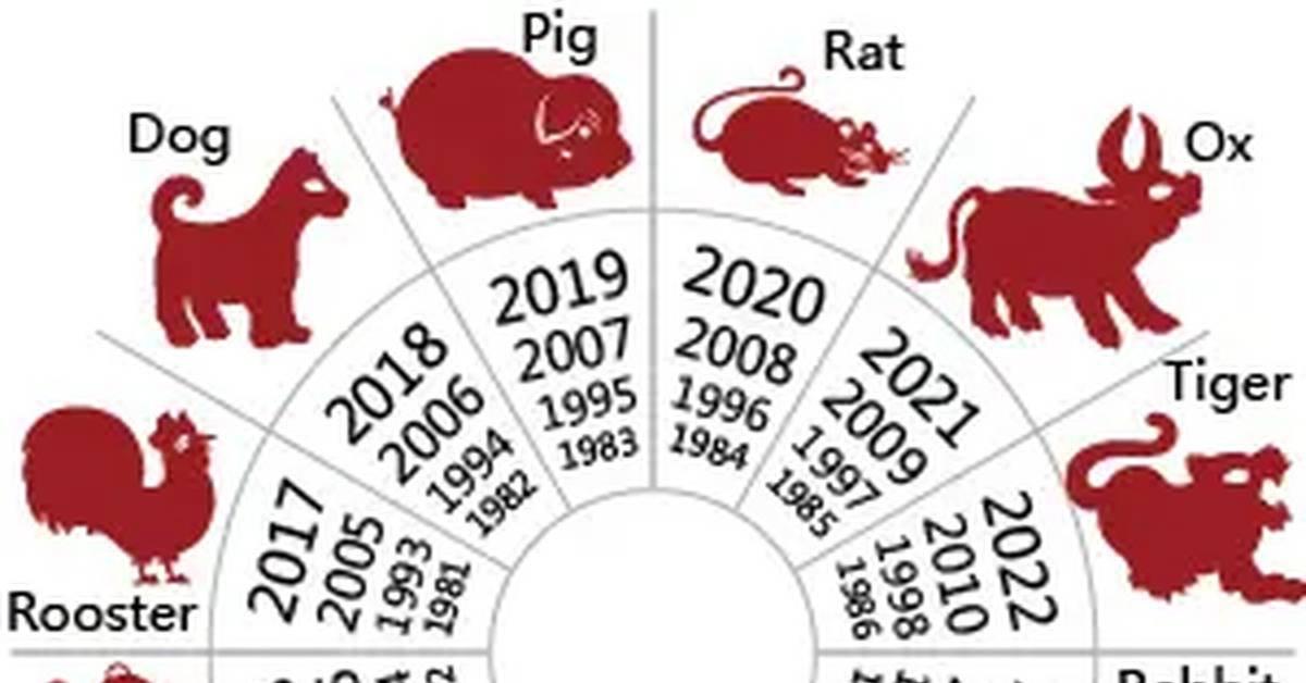Свинья и свинья - совместимость знаков. мужчина-свинья, женщина-свинья: совместимость :: syl.ru