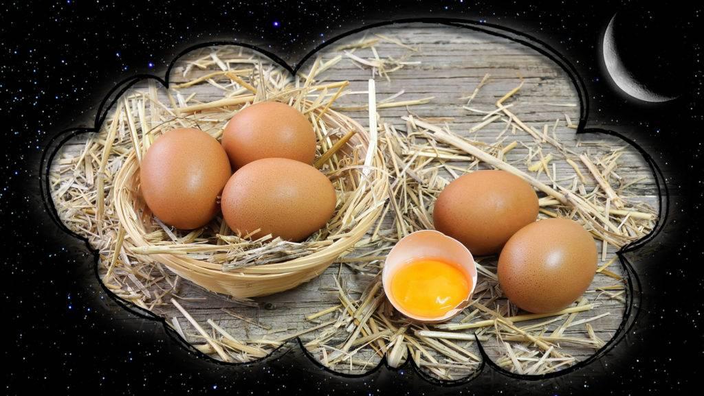 К чему снятся яйца куриные? сонник - куриные яйца во сне.