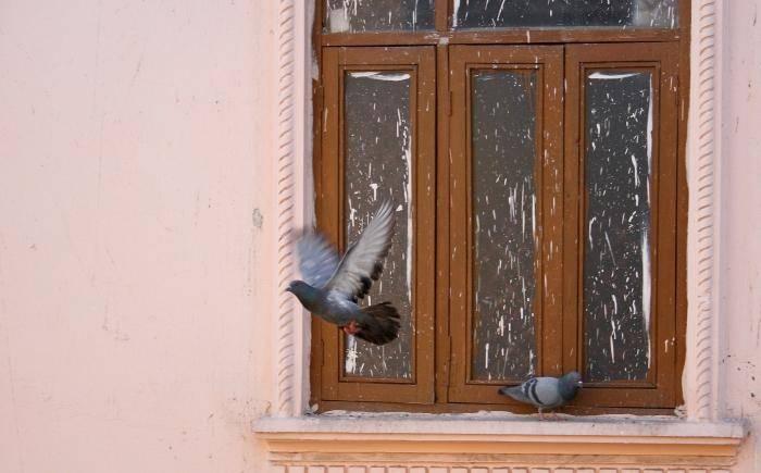 Птица залетела в окно – к чему это: народные приметы и поверья