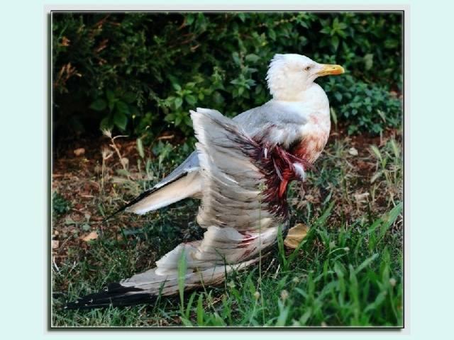 Ожившие мертвые птицы