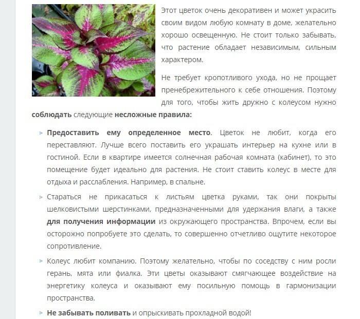 Драцена приметы и суеверия, можно ли держать в доме, история цветка