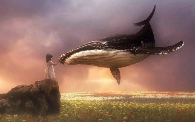 К чему снится кит? сонник: кит приснился во сне