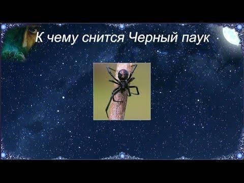 К чему снится большой паук по соннику? видеть во сне большого паука – толкование снов.