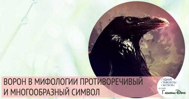 Приметы про голубей: к чему прилетают во двор, сели на машину, нагадили на голову, сбить птицу, увидеть раненую, стаю