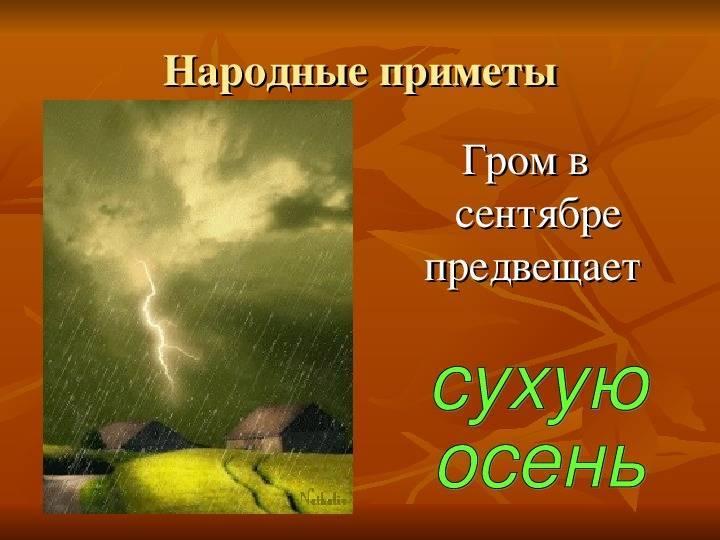 Народные приметы про птиц - предсказание погоды