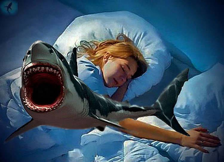 К чему снится акула: в воде, в море, акула во сне женщине.
