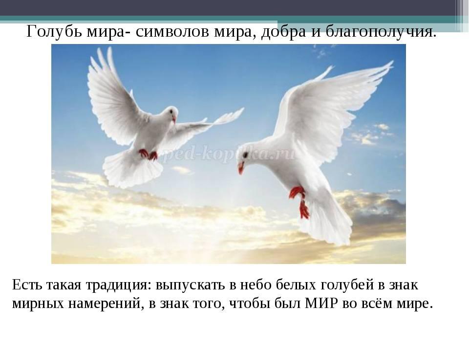Белый голубь символ | астросоветник